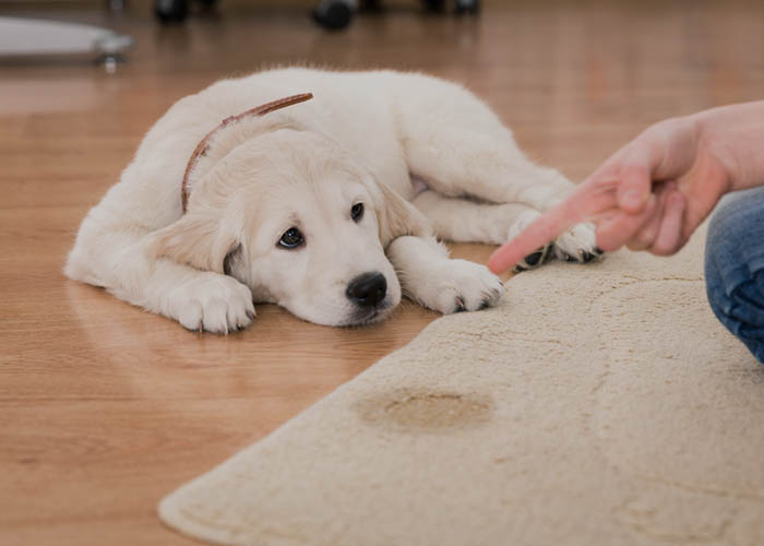 Smoke and Odour Removal Services - Pet Odours
